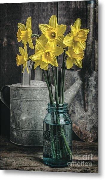 Spring Daffodil Flowers Metal Print