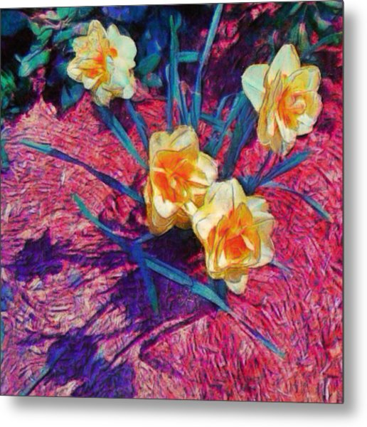 Spring Daffodils On Red - Square Metal Print
