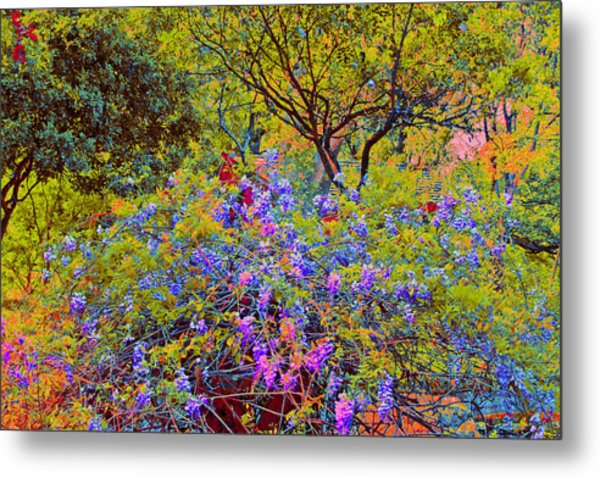 Spring Flowers At Zilker Botanical Gardens In Austin Texas Metal Print By  Bill Blackmon