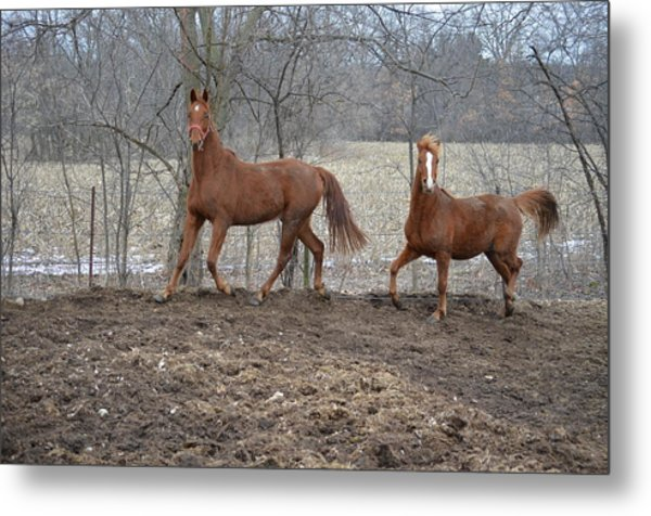Spring Frolic Metal Print by Jennifer  King