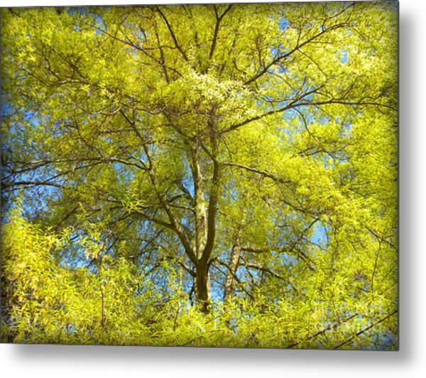Spring Greening Metal Print by Lorraine Heath