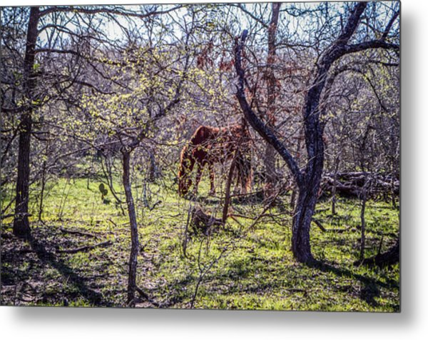 Spring Has Sprung Metal Print by Kelly Kitchens