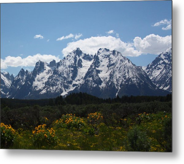 Spring In Grand Tetons National Park Metal Print
