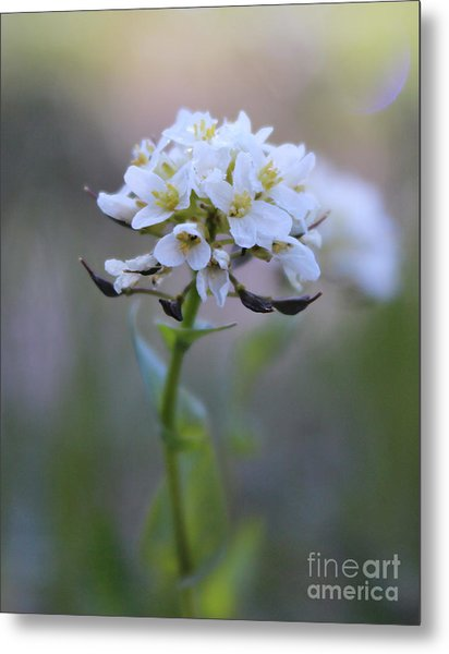 Metal Print featuring the photograph Spring In The Cimarrons by Kate Avery