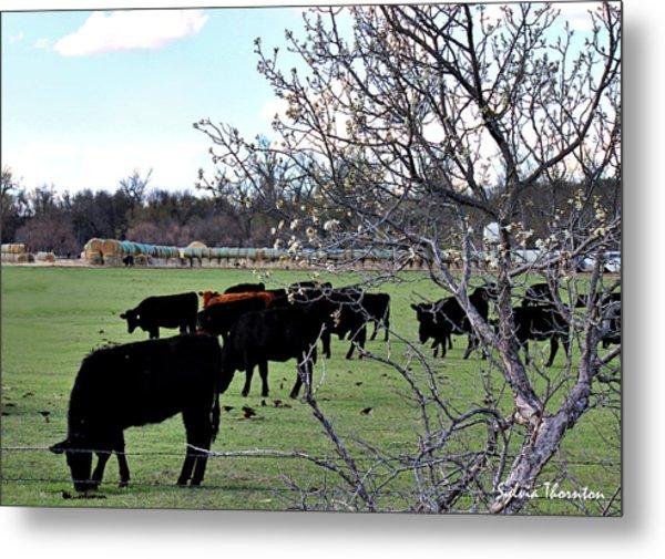 Spring In The Hay Meadow Metal Print