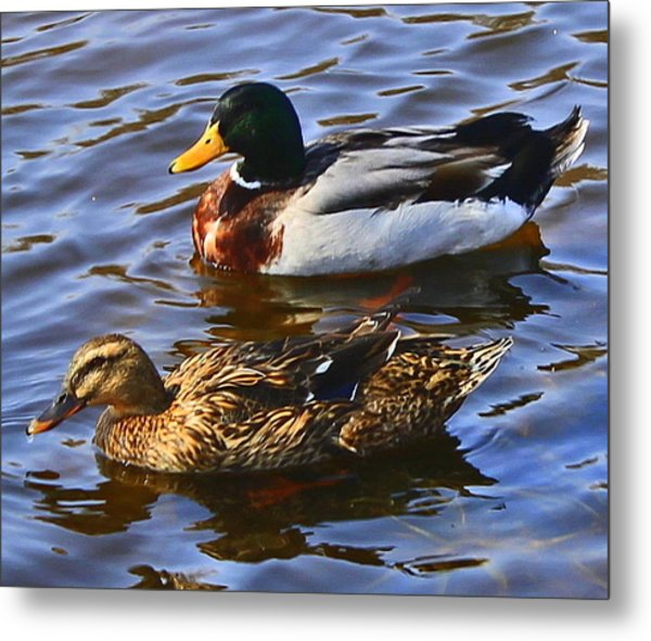 Spring Is In The Air Metal Print by Victoria Sheldon