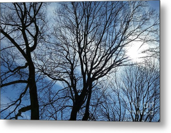 Spring Is In The New England Air Metal Print