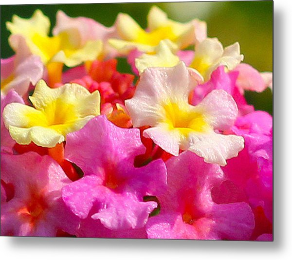 Spring Lantana Metal Print by James Hammen