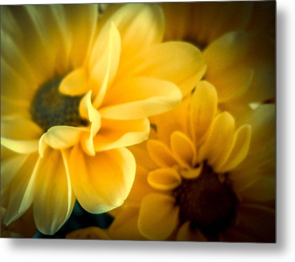 Metal Print featuring the photograph Spring Mums by Judy Hall-Folde