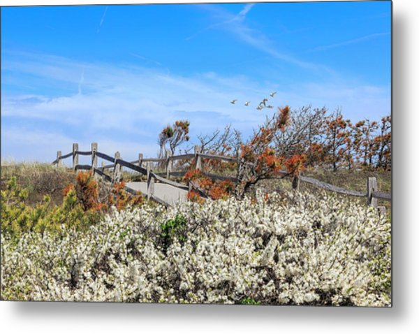 Spring On Cape Cod Metal Print