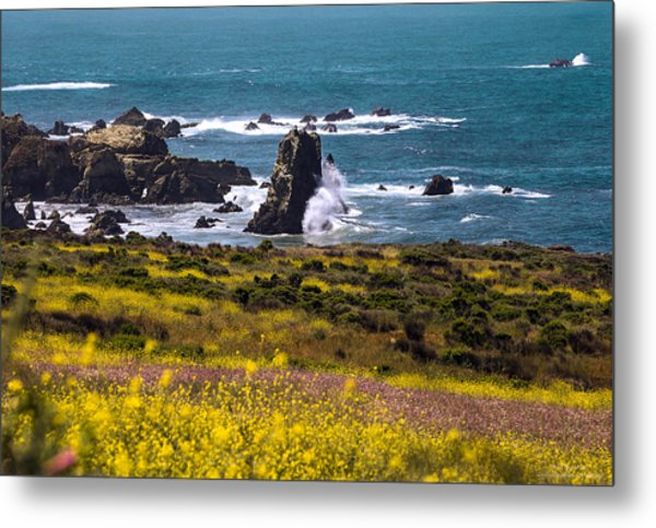 Spring On The California Coast By Denise Dube Metal Print