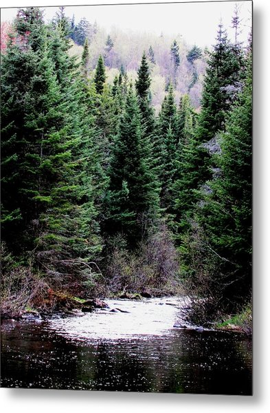 Spring On The Stream Metal Print by Will Boutin Photos