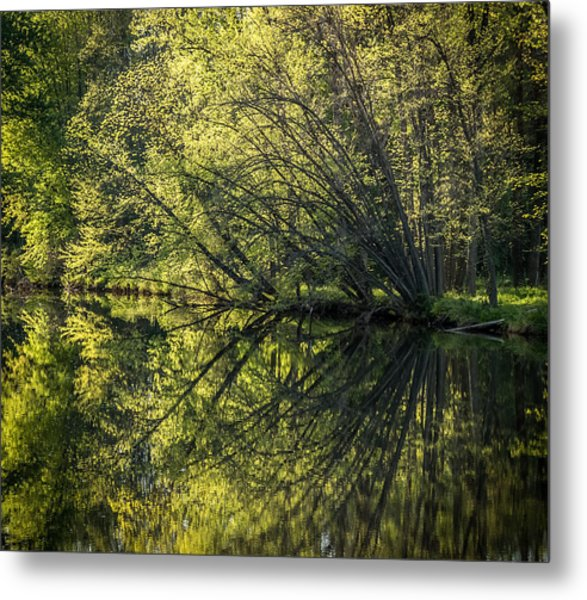 Spring Reflections Metal Print by Jeffrey Frazier