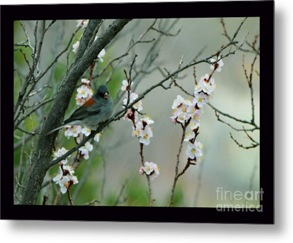 Spring Snow In Apricots Metal Print