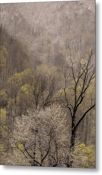 Spring Snow Metal Print by Tom  Reed