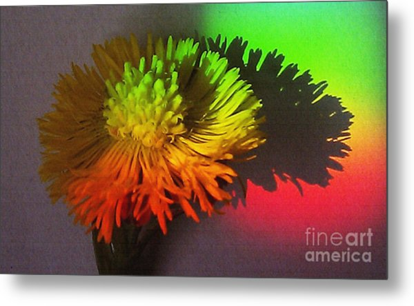 Spring Through A Rainbow Metal Print
