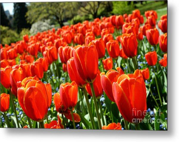 Spring Time Tulips 3 Metal Print by Terry Elniski