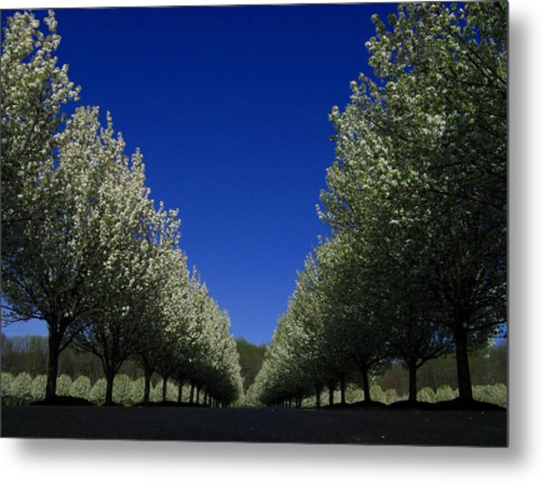 Spring Tunnel Metal Print