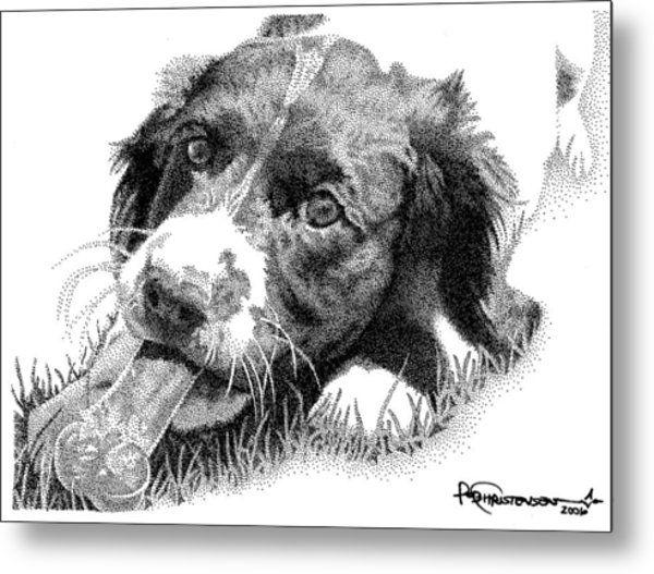 Metal Print featuring the drawing Springer Puppy by Rob Christensen