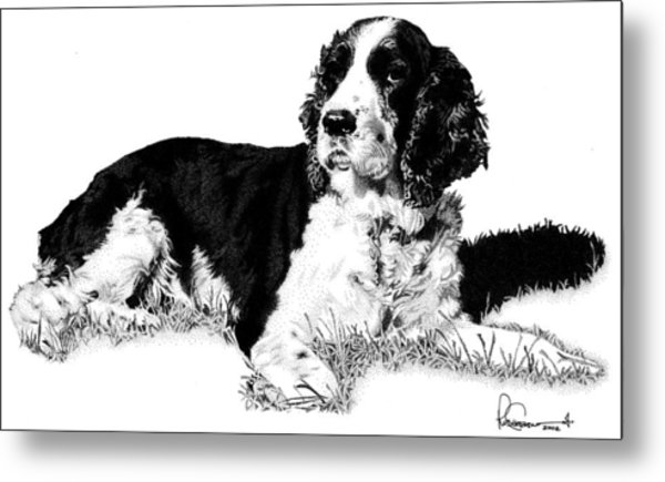 Metal Print featuring the drawing Springer by Rob Christensen