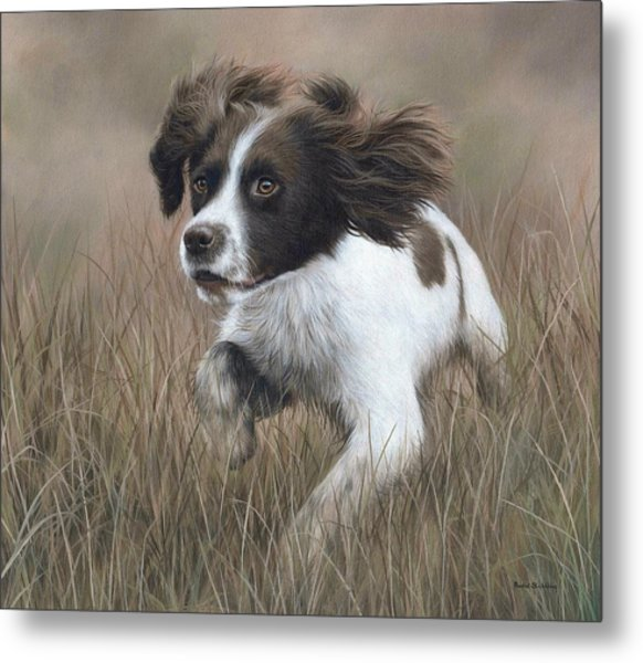 Springer Spaniel Painting Metal Print