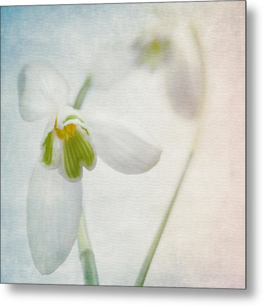 Springflower Metal Print