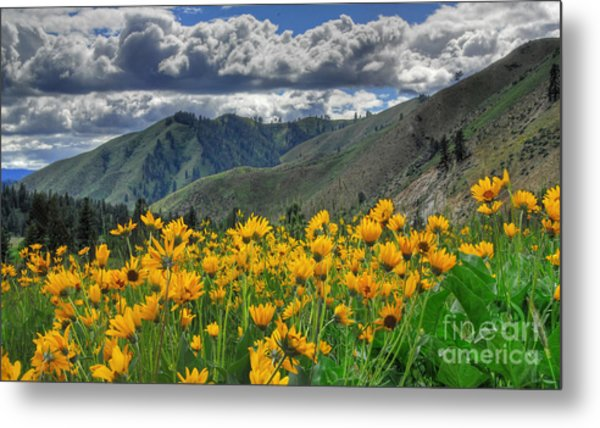 Springtime At Gallagher Metal Print