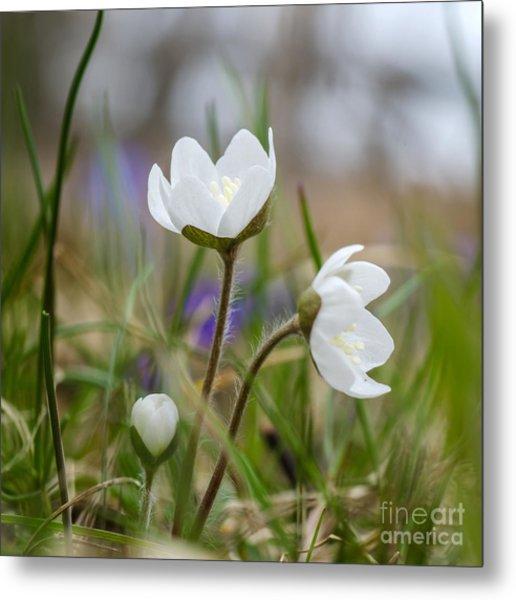 Springtime Blossom Metal Print