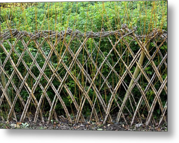 Sprouting Willow Fence Metal Print by Bob Gibbons