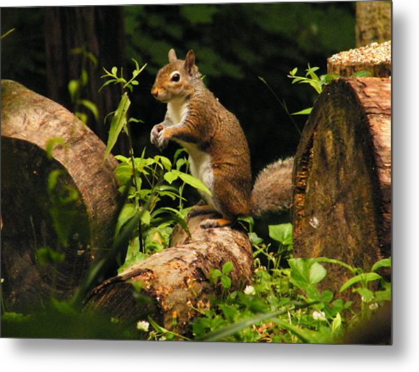 Squirrel Metal Print by Brittany Gandee