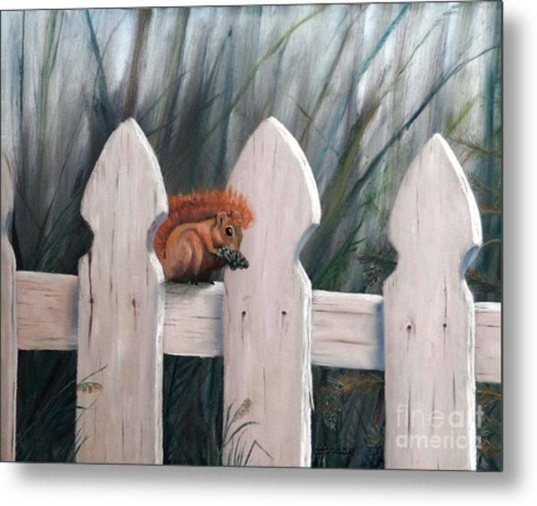Squirrel Dining On Pine Metal Print by Stephen Schaps