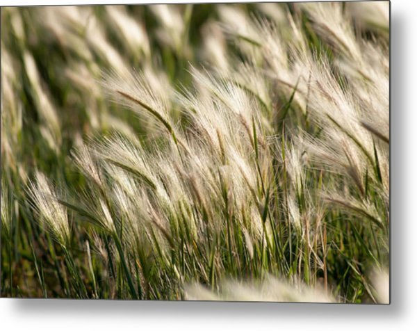 Squirrel Grass Metal Print