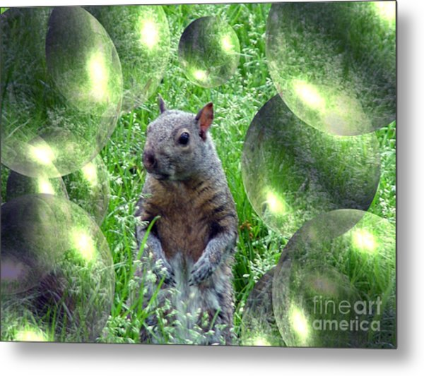 Squirrel In Bubbles Metal Print