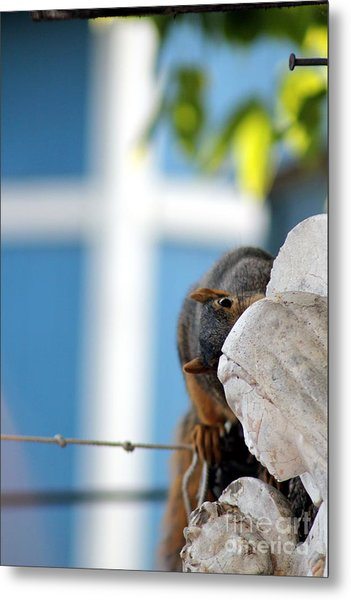 Squirrel In Hiding Metal Print