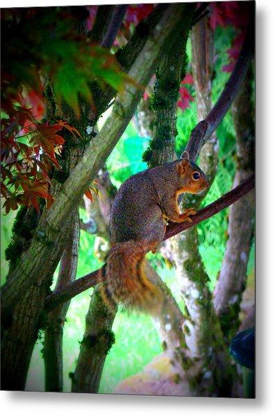 Squirrel In My Tree Metal Print