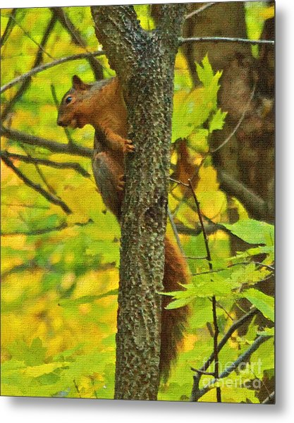 Squirrel In The Woods 2 Oil Metal Print