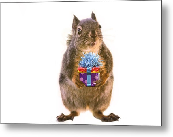 Squirrel With Gift Metal Print