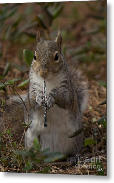 Squirrel With His Obo Metal Print