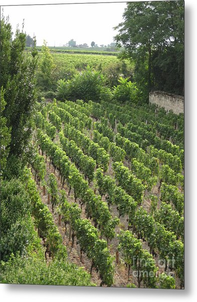 St. Emilion Vineyard Metal Print