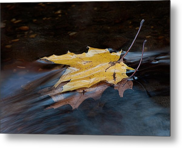 Stacked Autumn Leaves On Water Metal Print