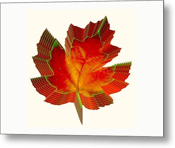 Stacked Maple Leaf  Metal Print by Susan Elizabeth Dalton