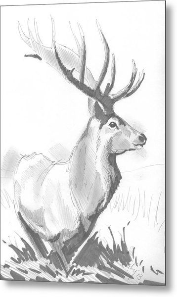 Stag Drawing Metal Print
