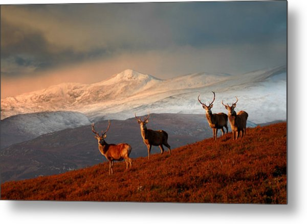 Stags At Strathglass Metal Print