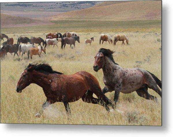 Stallion Chase Metal Print by Gene Praag
