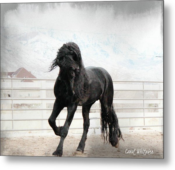 Stallion Magic Metal Print