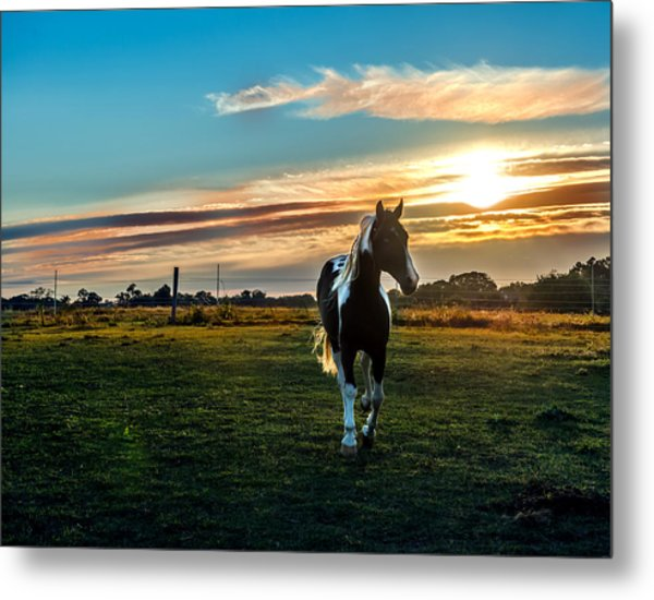 Stallion Sunset Metal Print