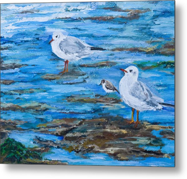 Sea Birds Wait Metal Print