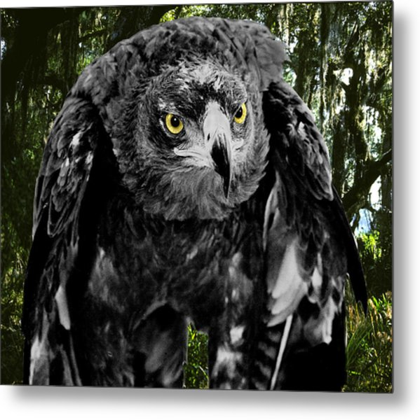 Standing Eagle Metal Print by Fred Leavitt