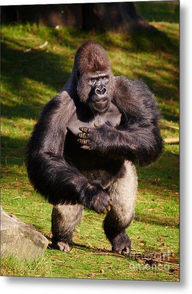 Standing Silverback Gorilla Metal Print