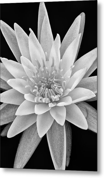 Star Of The Water Metal Print